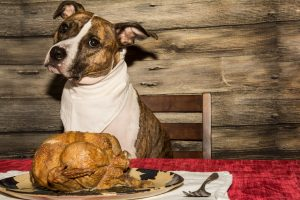 What your Dog can Eat on Thanksgiving from a veterinarian in Westchase